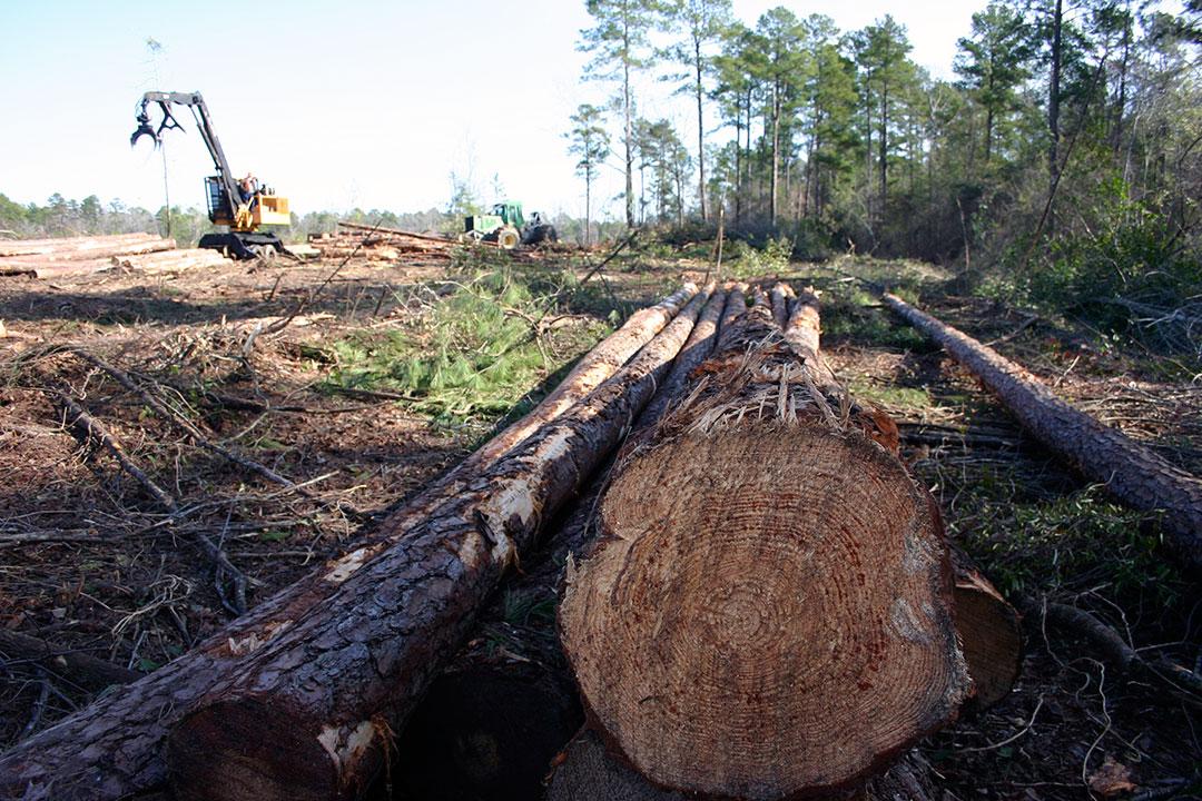 G.W. Logging   Efficiency Hound