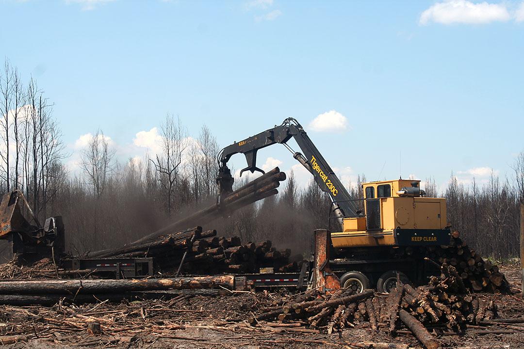 Rampey Logging   Ramped Up