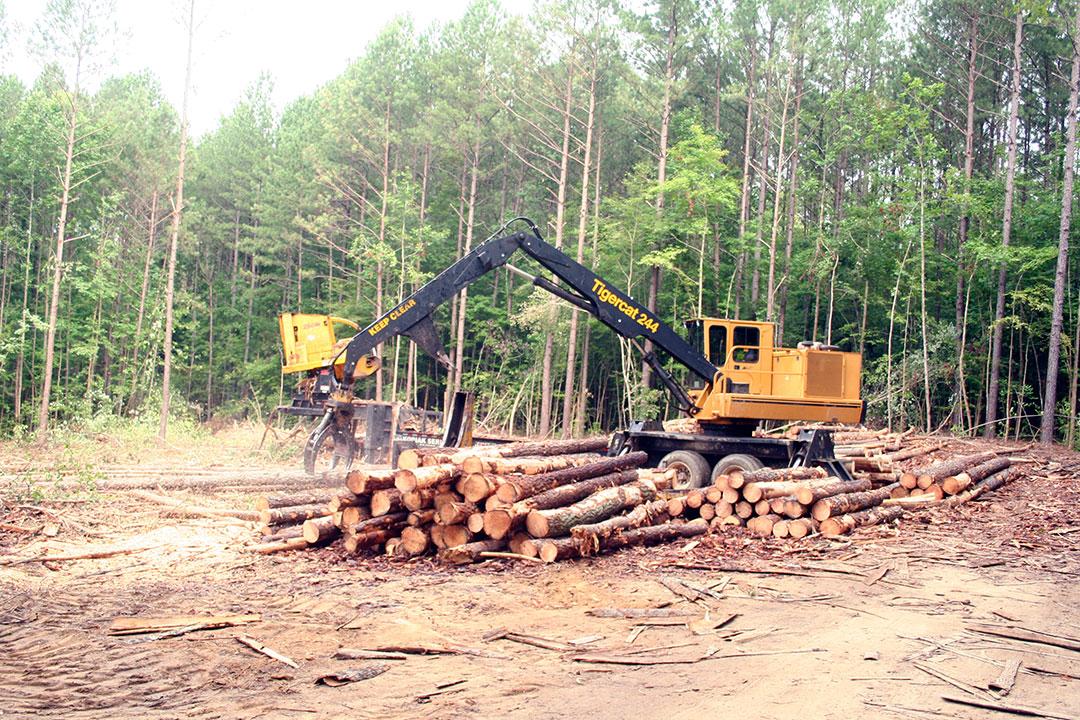 Harmon Timber | Good Start