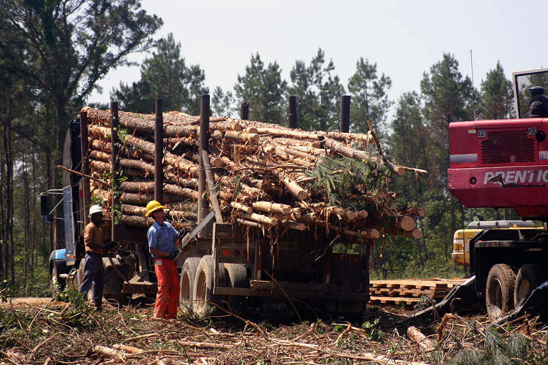Smith Timber   Taking Control