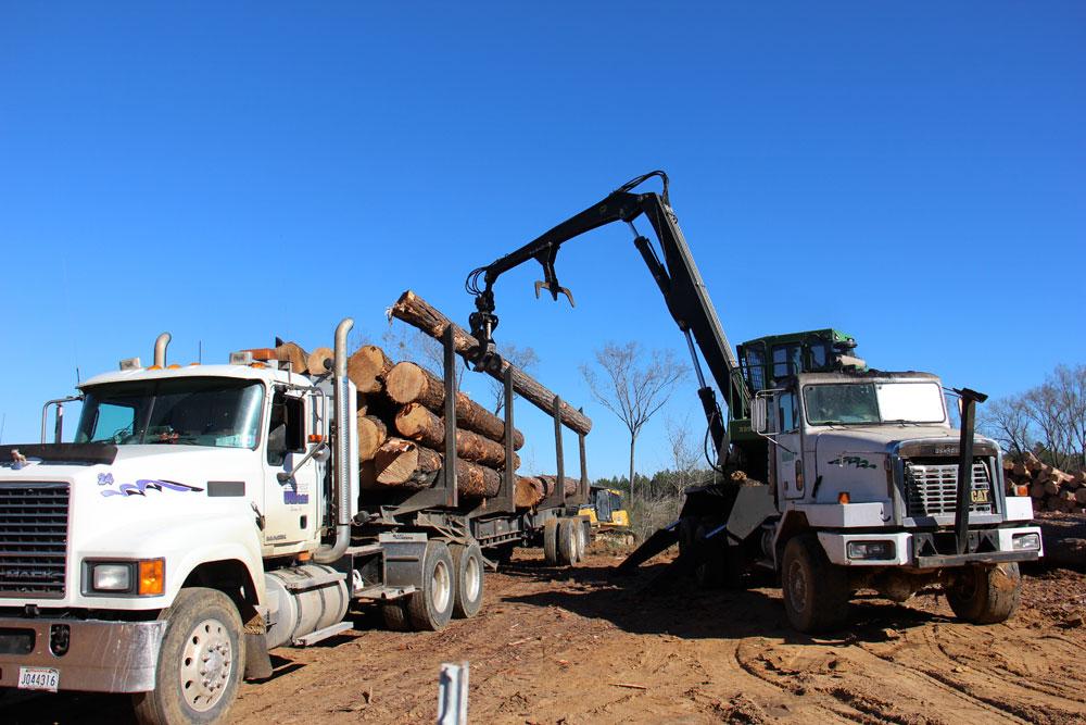 Greg Williams Logging   One Fine Day