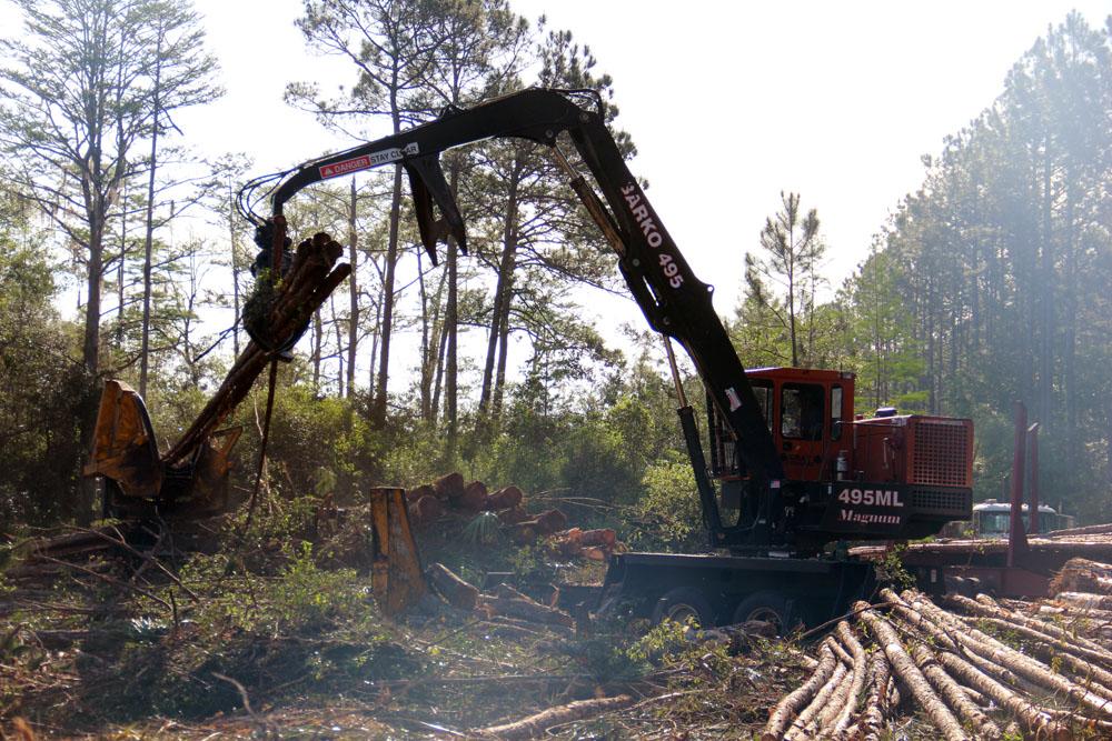 Gray Logging   Roots Run Deep