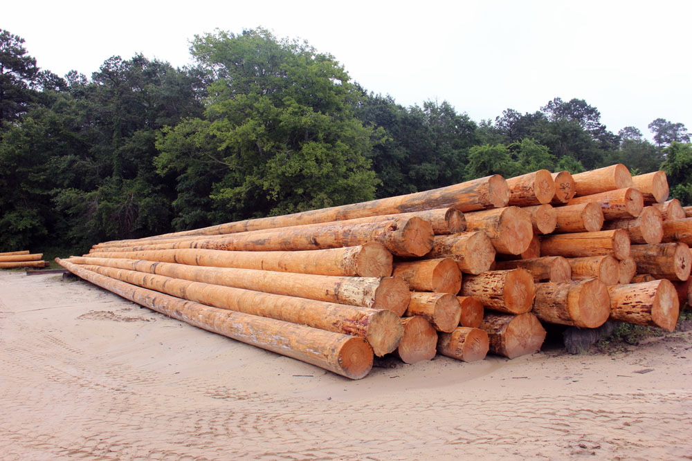 SC Pole and Piling   Logs Into Poles