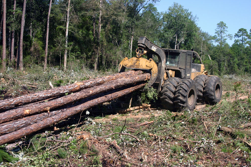 HITREE Logging | Swamp Specialist