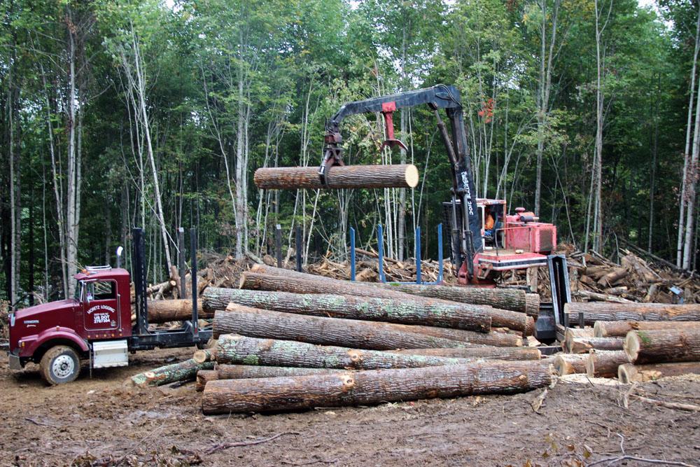 Moretz Logging   Small Scale Charm