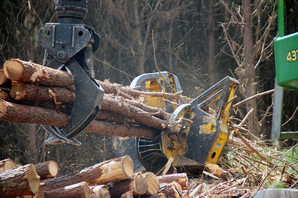 Edwin Taylor and Son Logging | Steady Rolling