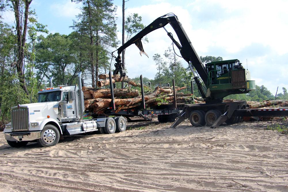 Steitler Land & Timber   Staying Focused