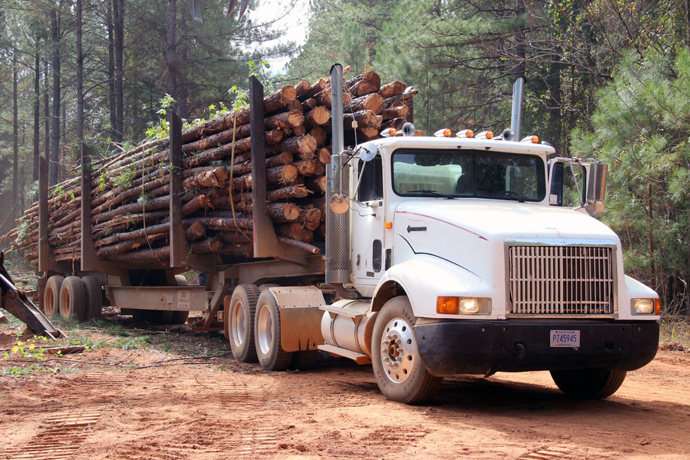 Barfield's Timber   Welcome Back