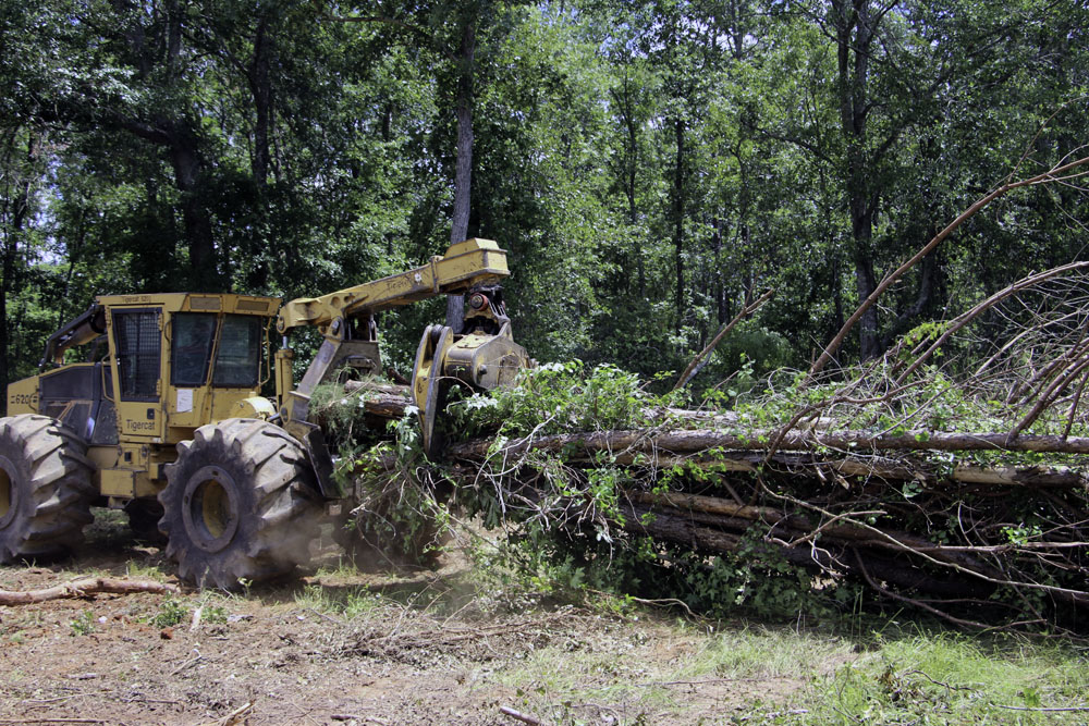 Mills Timber Harvesting | Close To Home