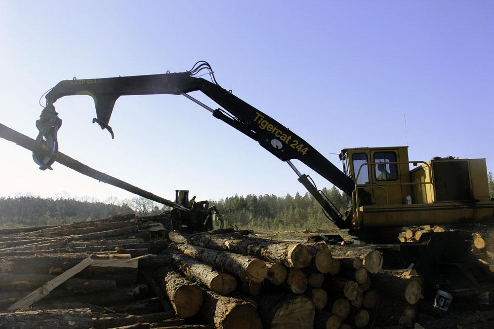 Thompson Logging   Cool Customer