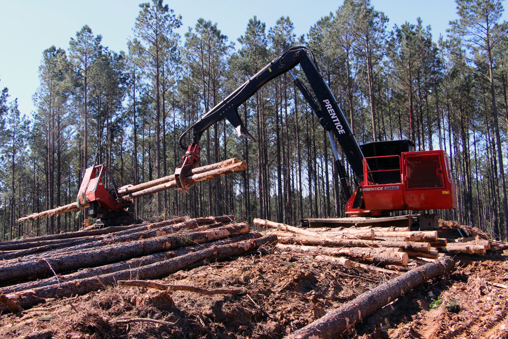 Brian Smith Logging, Inc. | Looking Up