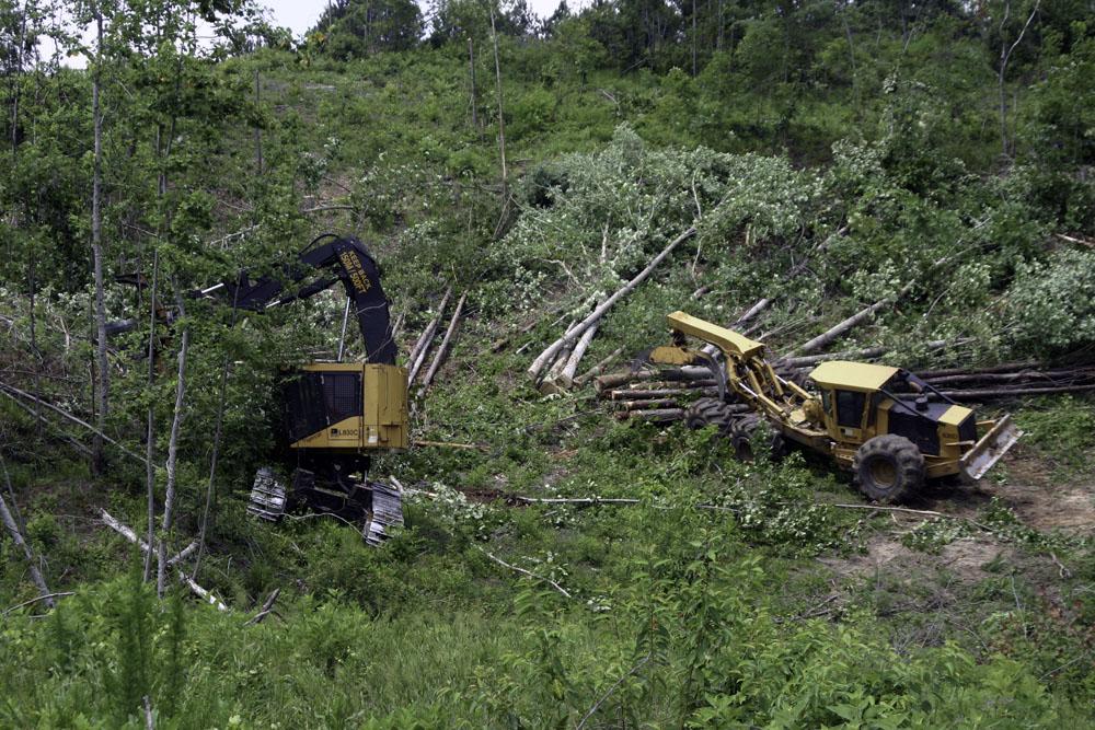 TDK Logging   Gone Viral
