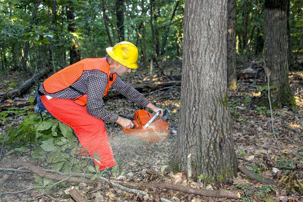 Greg Head Logging | No Rush